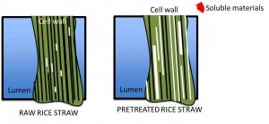 Rice Straw NKpresentation